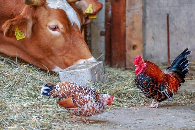 ganaderia de mantenimiento en granjas