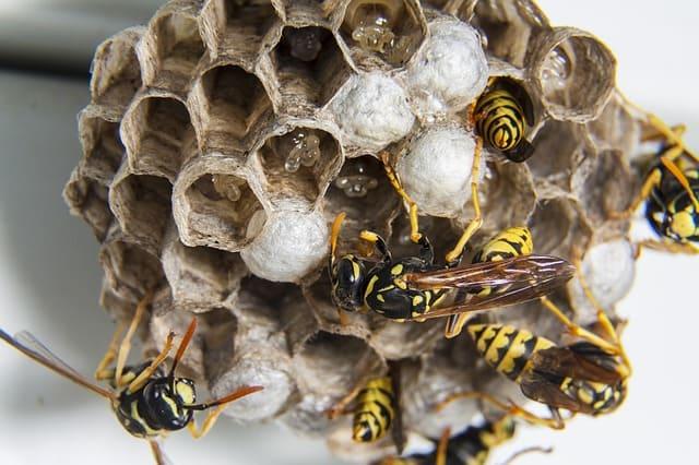 Primeros auxilios para preparadores - Parte 4: picaduras, mordiscos e insectos estomacales